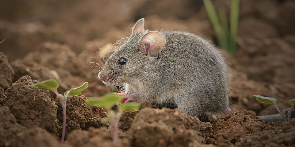 Wilson Control Mice Control Identify Prevent Act