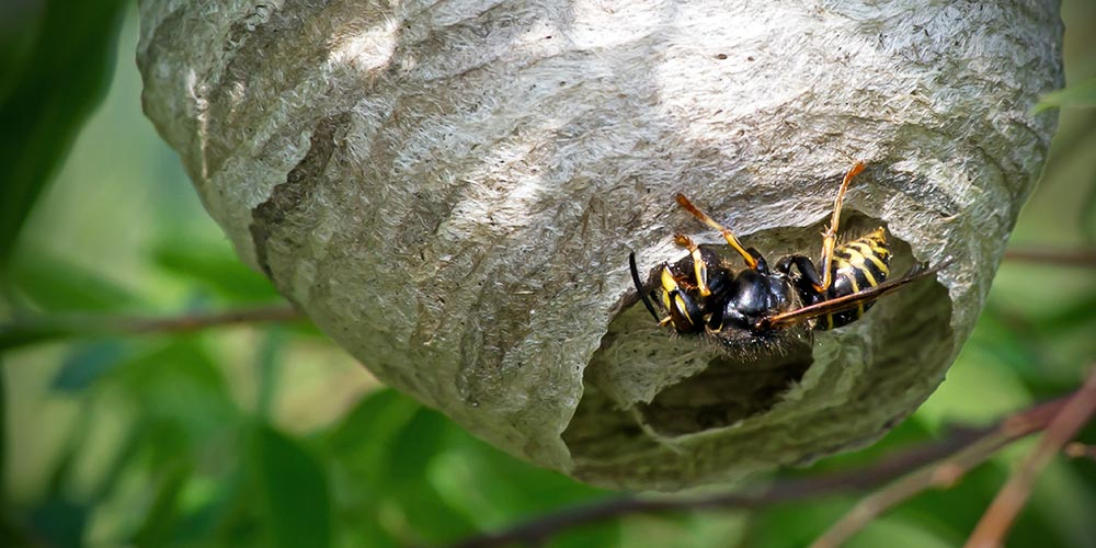 Wilson_Desktop_Tips_How_to_get_rid_of_wasp_nest